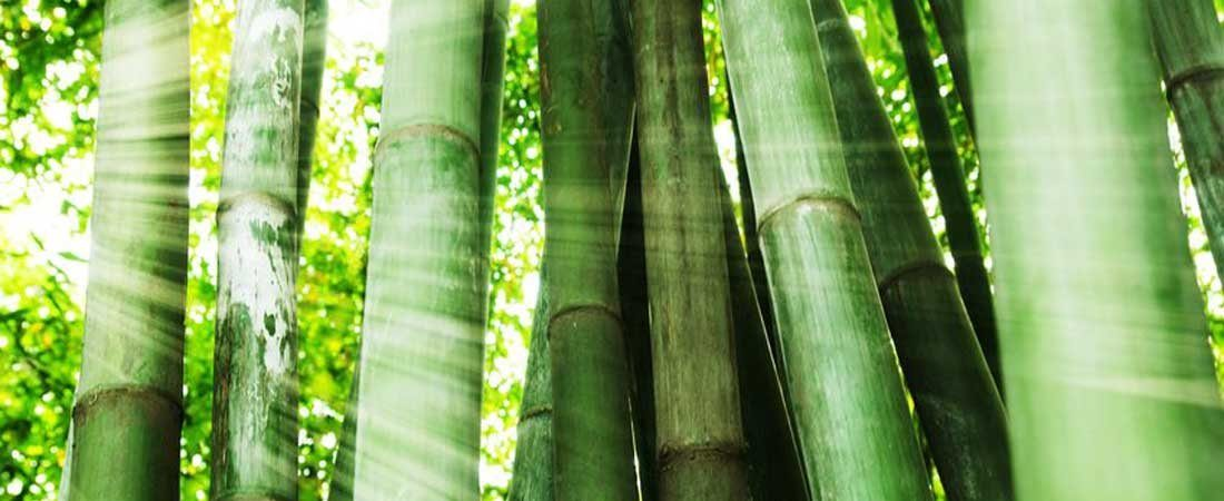 Klein Vloer Bamboe Ecologisch